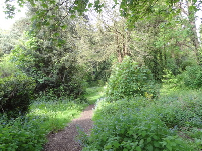 The Wood Nature Reserve