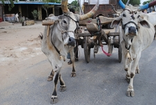 Village And Rural Tourism In India