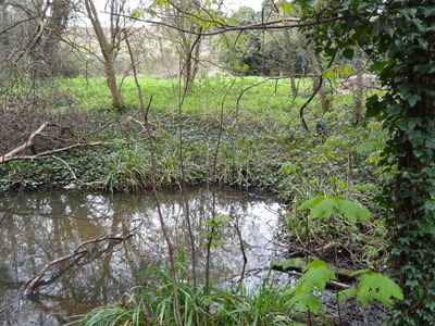 Wandle Valley Wetland