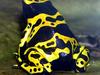 Yellow  Banded Frog