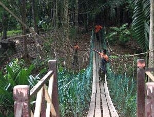 Ayer  Keroh  Jungle