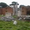 The Remains Of Basilica Aemilia