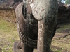 Elephant Sculpture At The East Mebon