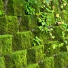 Jinguashi Historic Gold Mine Moss Covered Retaining Wall