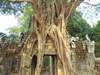 The Third Eastern Gopura With Strangler Fig