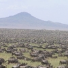 Wildebeests Migration Safari