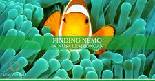 Horizontal Cover Finding Nemo Nusa Lembongan Island Family Tour Veni Vidi Bali