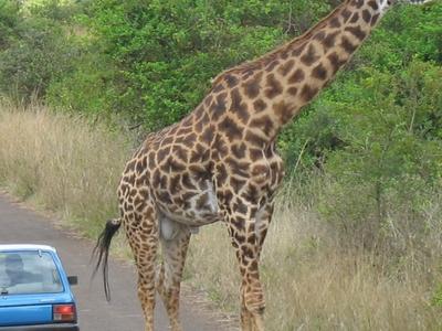 Nairobi N Park 2