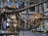 The Dinosaur Hall Reverse View