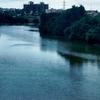 Pavana River At Ravet