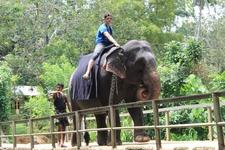 Haniffas Holidays - Elephant Foundation