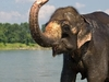 Chitwan002