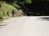 Wild Boars On A Path In The Lainzer Tiergarten