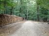 A Path In The Lainzer Tiergarten