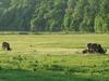 Lainzer Tiergarten Meadow