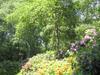 Rhodondendron Garden In The Amstelpark