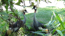 01 Balibirdpark