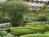 Greenhouse No. 28 At The Saint Petersburg Botanical Garden
