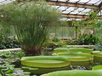 Saint Petersburg Botanical Garden