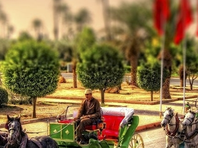 Horse And Cart In Marrakech