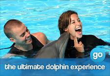 Dolphin Encounters Fun