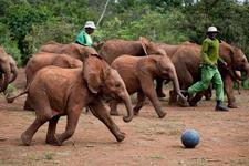 Elephant Can Play Football