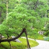 Garden At Manshu-in