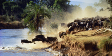 Wildebeest Migration Serengeti