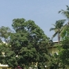 Campus View Of Pilar Seminary
