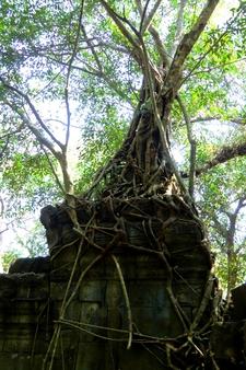 Sunsai Tours Motorbike Jungle Temple 5