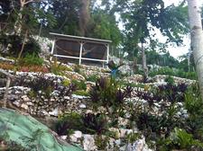 Terracedland