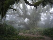 Mt Meru Forest