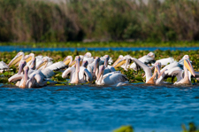 Bird Watching Danube Delta