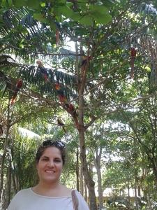 Scarlet Macaws Birds Costa Rica Brenda
