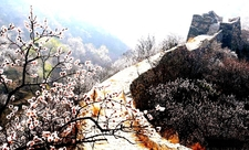 Great Wall In Spring