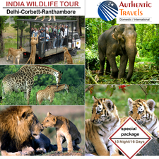 India Wildlife Tour Copy