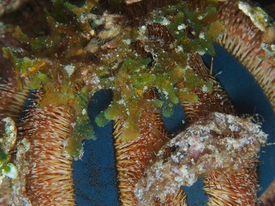 Scuba Diving Bohol