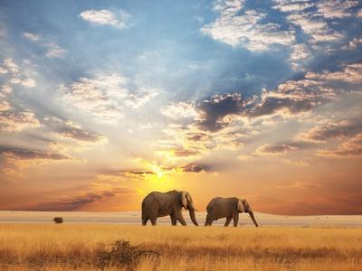 Africa Safari Elephants Great Plain