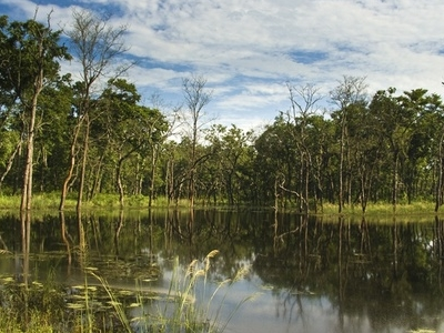 Beeshazar Lake Near Chitwan National Park