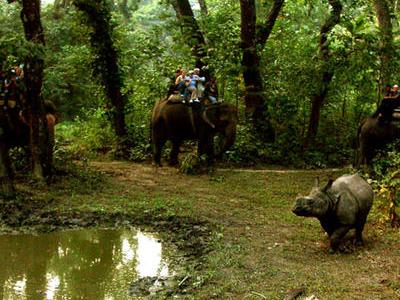 Elephant Safari After An Indian Rhinoceros