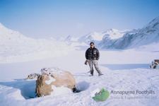 Annapurna Circuit Tilicho Lake Thorung La Pass Trekking