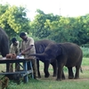 Elephants Having Food At Vandalur Zoo