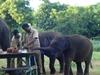 Elephants Having Food At Vandalur Zoo