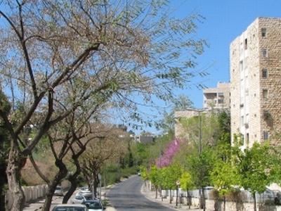 Yehuda Burla Street, Nayot