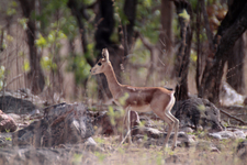 Chinkara Breeding Centre