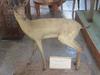 Stuffed Chinkara (Indian Gazelle)
