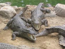 Crocodile Breeding Centre