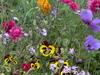 Flowers Blooming At The Jerusalem Botanical Gardens