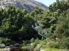Rapanea Trees And Some Waboom