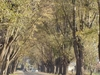 The Bacchus Marsh Avenue Of Honour